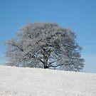 Frosty Fagus by John Keates
