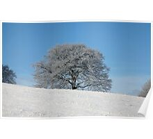 Frosty Fagus Poster