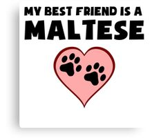 My Best Friend Is A Maltese Canvas Print