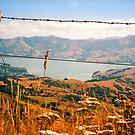 Looking down on Akaroa by apple88