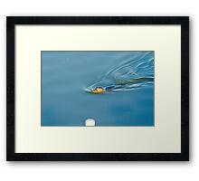 Seal in Wells next the Sea Framed Print
