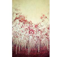 The Red Forest Photographic Print