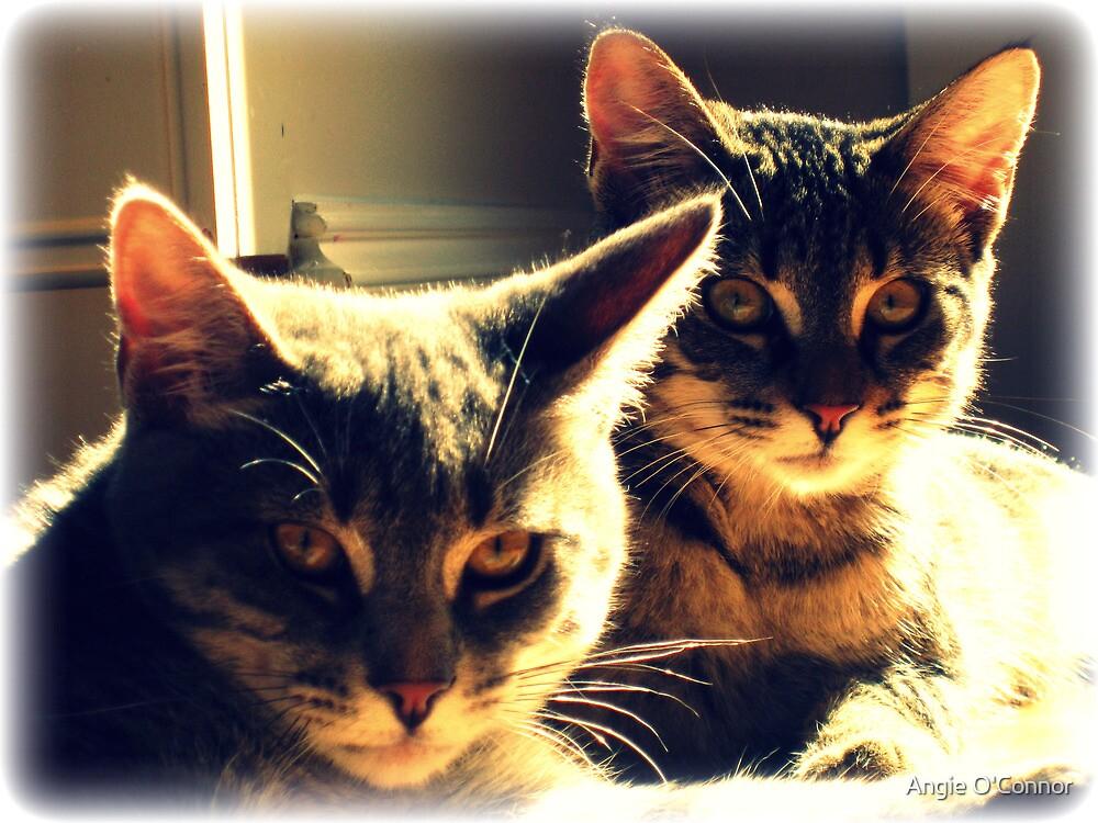 Skippy & Jilly  by AngieBanta