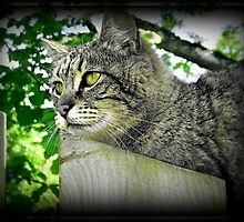 Tiger Kitty on The Fence by AngieBanta