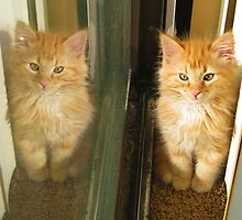 Kitty Reflection by AngieBanta