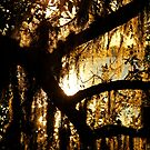 Spanish Moss Sunset by Terri~Lynn Bealle