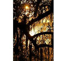 Spanish Moss Sunset Photographic Print