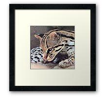 Ocelot Framed Print