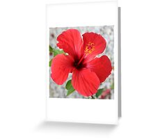 A Stunning Scarlet Hibiscus Tropical Flower Greeting Card