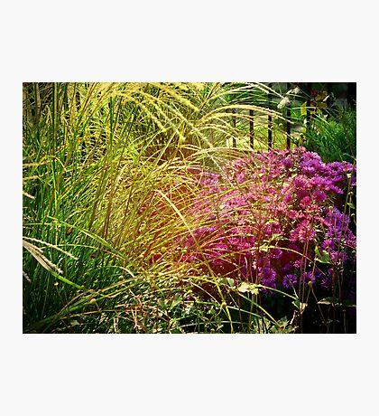Autumn Garden Vingette Photographic Print