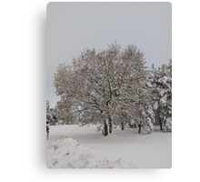 tree on the golf course Canvas Print