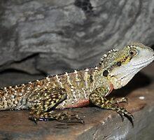 Lizard by Joanne Emery