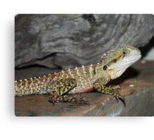 Lizard Canvas Print