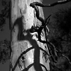 Scary Trees- Charleston Conservation Park by Ben Loveday