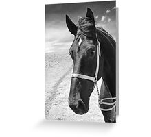 Percheron Classic Greeting Card