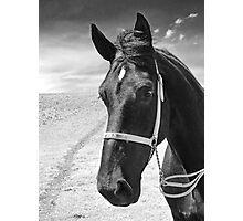 Percheron Classic Photographic Print