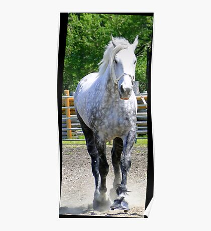 The Old Gray Mare Poster