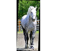The Old Gray Mare Photographic Print