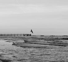 Carried by the Wind BW by Andrea Mazzocchetti