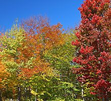 Colors of Fall by Paul Harrison