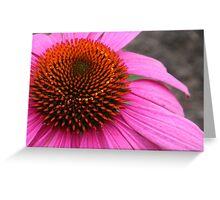 Cone Flower (Echinacea) Greeting Card