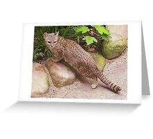 Random Andean Mountain Cat Greeting Card
