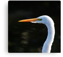 Great White Egret in Detail Canvas Print
