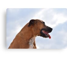Beautiful Gemma Dog Canvas Print