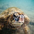 curious turtle by Flux Photography