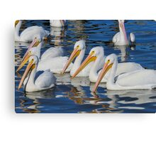 They're back again... Canvas Print