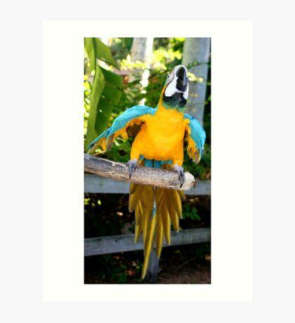 Playful Macaw Art Print
