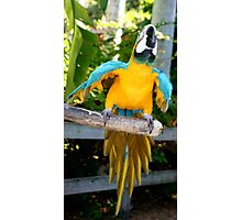 Playful Macaw Photographic Print