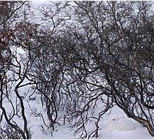 Hare's arctic lair Photographic Print