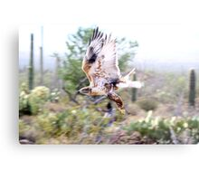 """""""Fly by"""" Metal Print"""