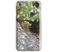 Superb Fairy Wren (Male) iPhone Case/Skin