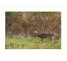 Whitetail Buck Prowling Art Print