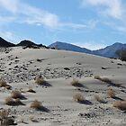 Desert Dune Sand Ripples by djackson