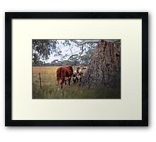 Twins - Mount Crawford, South Australia Framed Print
