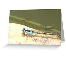 Dragon Blue Greeting Card