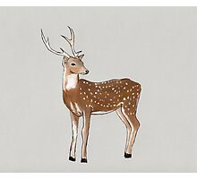 Nursery art - Deer that turns wishes Photographic Print