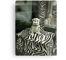 Pampered Pooch Metal Print