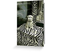 Pampered Pooch Greeting Card