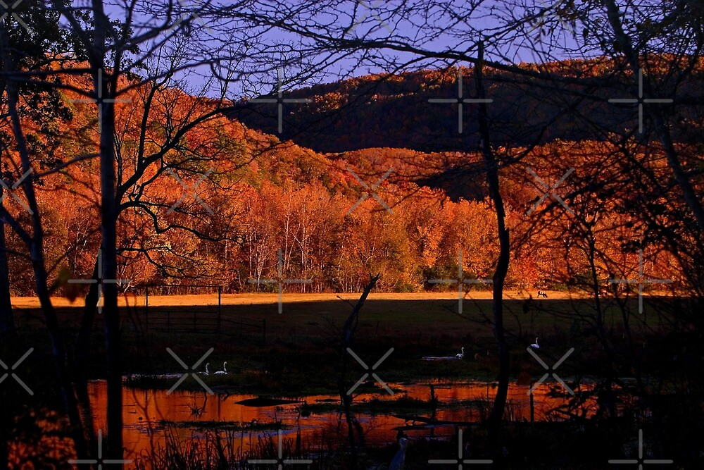 Swans in the Shadows by Lisa G. Putman