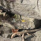 Anole  Drinking in Winter - Lizard Habitat - Smokies by JeffeeArt4u
