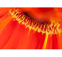 Gerbera wonderland - Canon EOS 5D Mark II Photographic Print