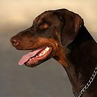 Doberman Portrait by Marion  Cullen