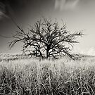 kohala tree B&W by Flux Photography