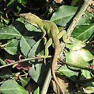Native Vines(Winter Creaper)- A favorite of the Anole by JeffeeArt4u