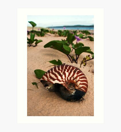Nautilus - Inskip Point near Fraser Island Qld Art Print