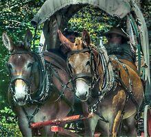 Mule Team by vigor